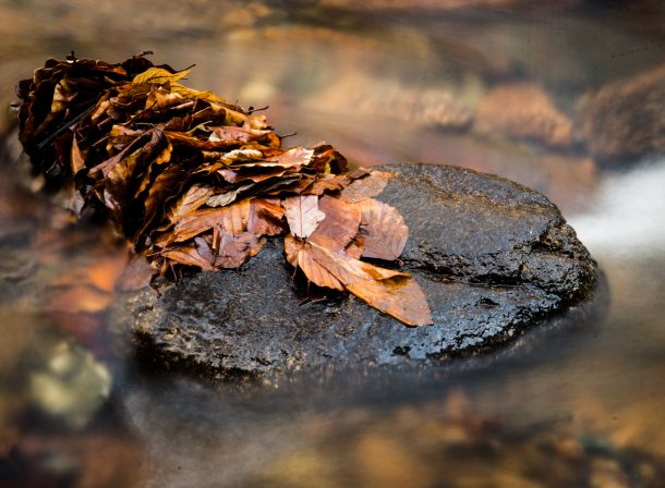Cindy Hess, Leipzig, Fotografin, photography, Natur, nature, leaf, autumn, fall, Herbst, Wasser, water, Ahorn, acorn, maple